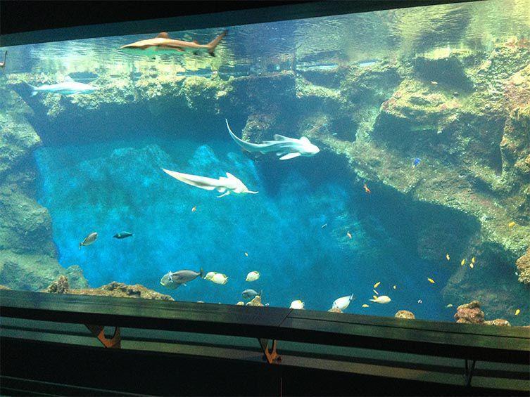 Bassin de l'aquarium de Lyon