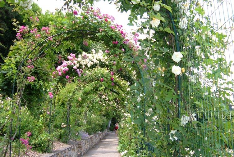 Fleurs du Jardin du Rosaire
