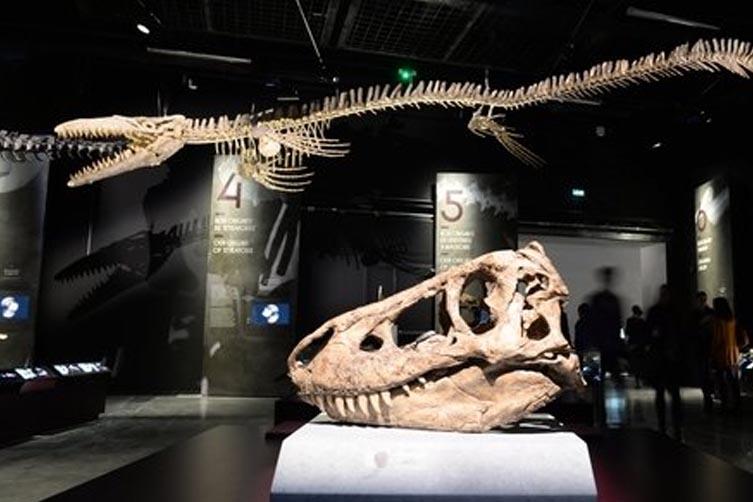 Dinosaures au Musée des confluences